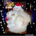 Jingle Maria