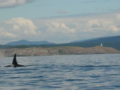 A Closer Look at an Orca