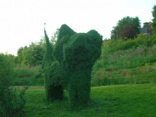This picture gives a closer view.... Richard had hoped also to make a topiary rabbit, but somebody keeps removing the structure he uses to encourage growth in an appropriate shape. We think this is down to pure envy and look forward to the day when t