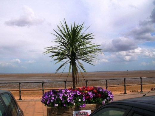 And back to where we started, with Cleethorpes In Bloom.