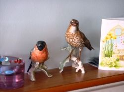 Goebel Thrush in pride of place
