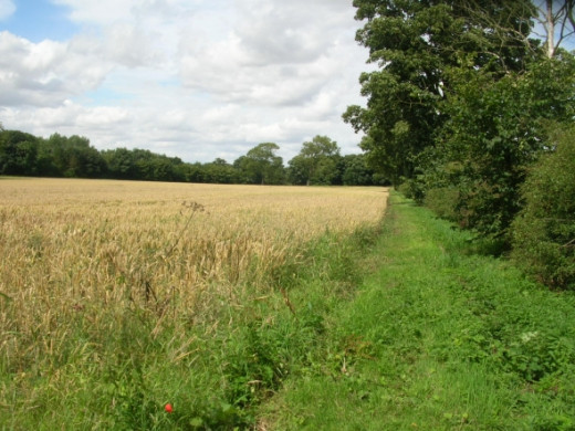 A view along the hedgerow shows the rich agricultural land of which Lincolnshire boasts.