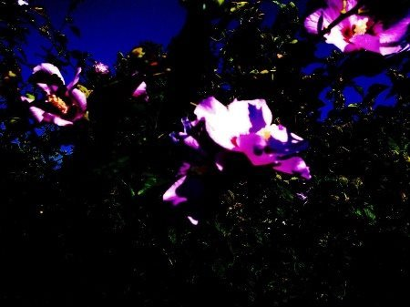 I took this photo and then digitally edited it to look dark where is was once light.