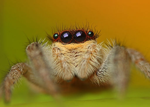 A Quick and Easy Guide to Spiders in Your House and Garden