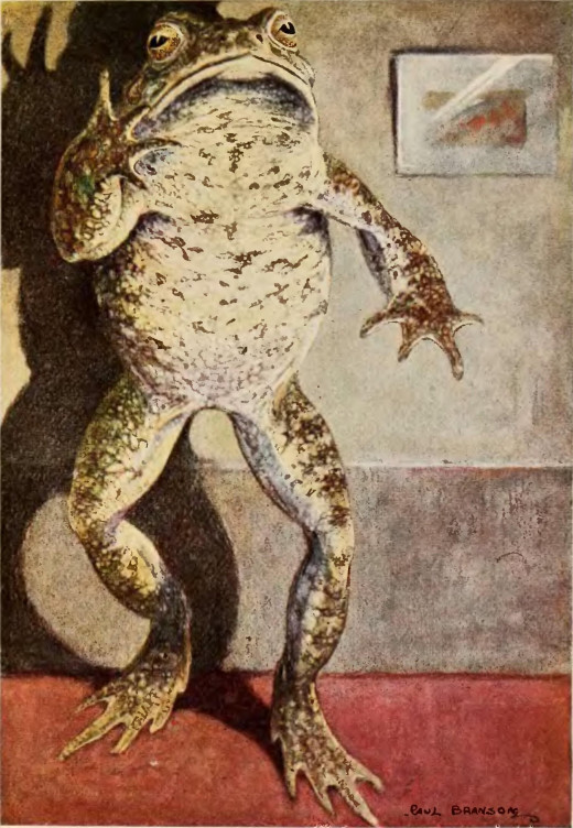 Mr. Toad stands at his full height. 1913. page 292By Bransom, Paul, illustrator, [Public Domain], via Wikimedia Commons
