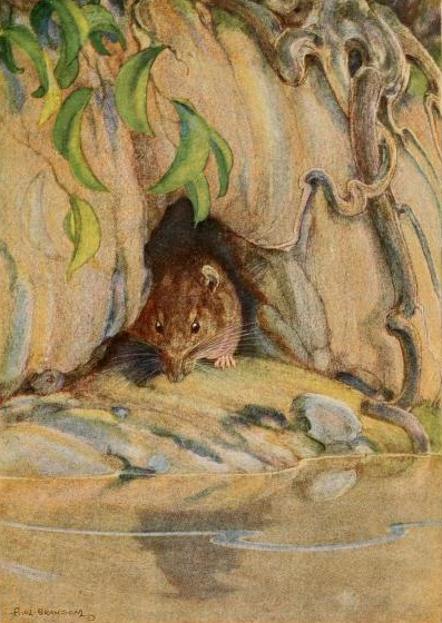 Water Rat emerging from his hole alongthe river bank. 1913. page 50.By Bransom, Paul, illustrator, [Public Domain], via Wikimedia Commons