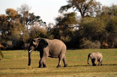 giant elephants at freedom