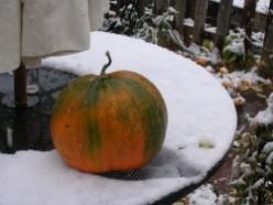 Prepare Your Vegetable Garden for Winter