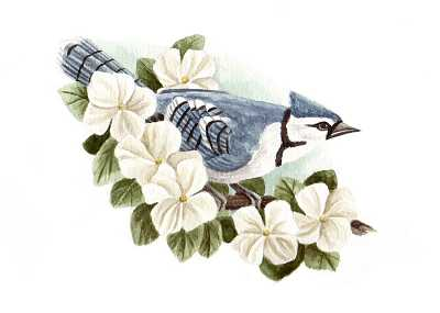 The Blue Jay, By Susan Hartley Swett