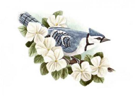 The Blue Jay, By Susan Hartley Swett