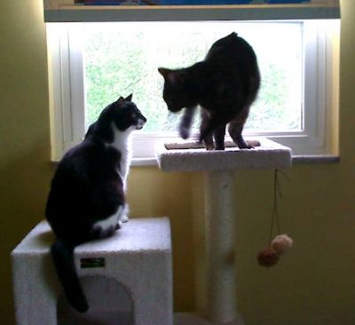 Our cats Muffin and Sunshine are enjoying their cat tree by the window.
