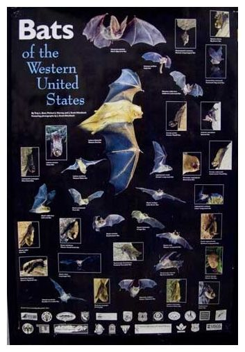 Bats of the Western United States