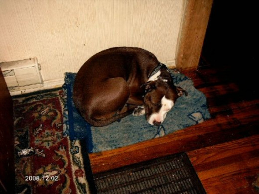 """This is a special """"dog blanket,"""" she likes to sleep on it."""