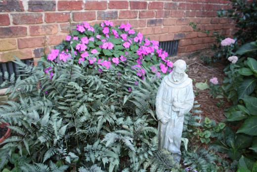 My Shade Garden Pink Impatiens, Ferns These are silver leaf ferns.
