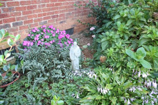 My Shade Garden Hydrangea, impatiens,, hosta, ferns, succulent
