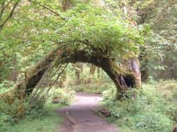 tree arch photo by euryale sinclair