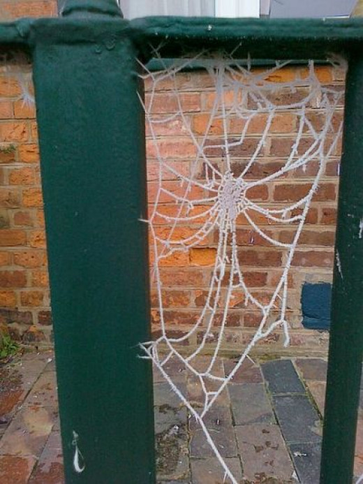 Frost Collected On a Cobweb (by Heggyhomolit on Wikipedia)