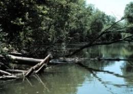 Poultney River