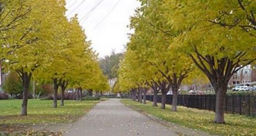Burlington Bike Path