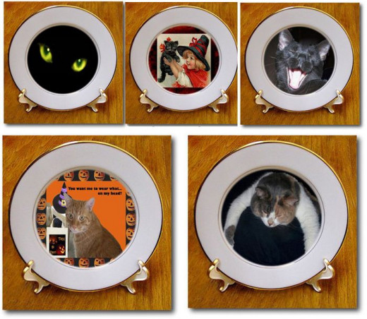 Cats looks so purrfect on plates