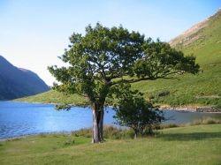 tree-Psalm 1