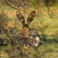 Bunny Rabbit Pictures