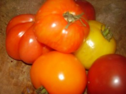 A collection of heirloom tomatoes from the garden is a treat whether fresh or canned.