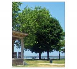 Ontario Beach - Rochester New York