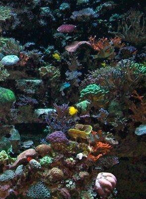 Fish  photo taken at SeaWorld - Orlando, Florida