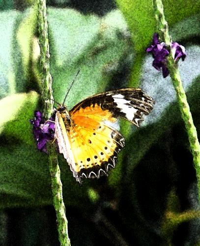 Clip Art Butterfly Photo