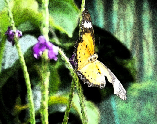 Butterfly Digital Photo
