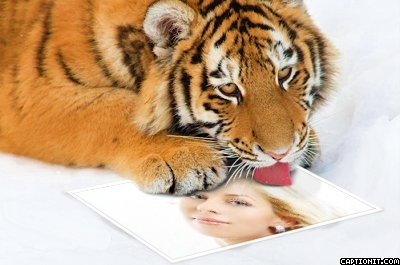Licking Tiger Photo Frame Text Generator