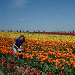 A Woman Walking in the Fields of Tulips at the Skagit Valley Tulip Festival