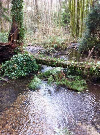 Marshy Area of Fish Habitat Trail