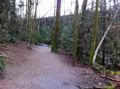 Marshy Area on the Mosquito Creek Trail