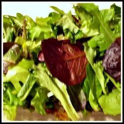 Mixed Salad Greens - Red Leaf Lettuce