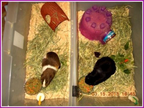 Ms. Sunny And Ms. Jessie Each Have Their Own Apartments
