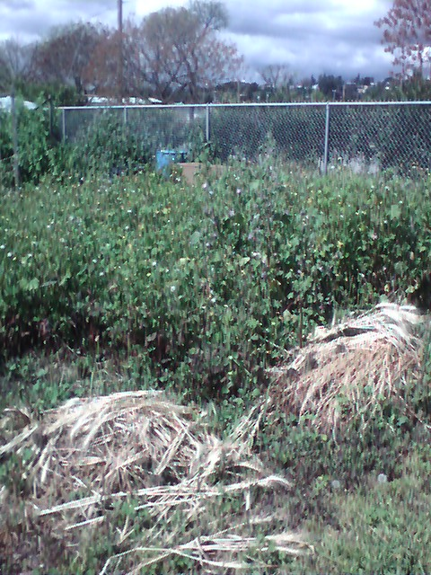 This is plot of land at the Hayward Community Garden where the Community Church of Hayward's Victory Garden will be