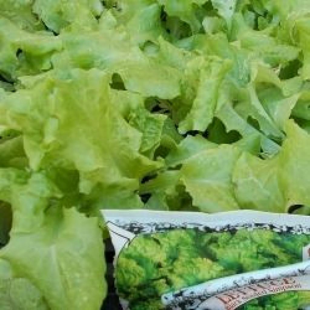 How To Easily Grow Garden Leaf Lettuce