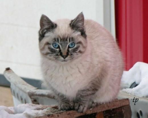 Barn Cat Mansion