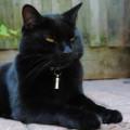 Black Cat Appreciation Day August 17