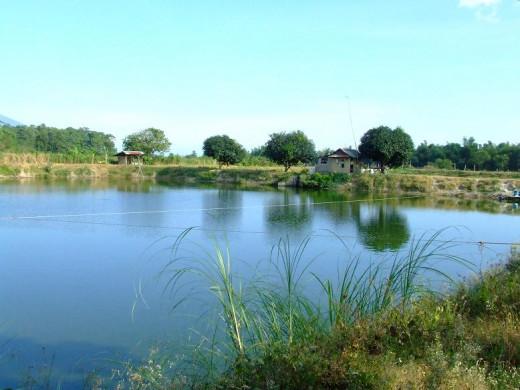 Tilapia Farm Pond in Mabalacat, Pampanga, Philippines