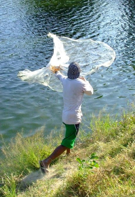 Checking the Fish Size by Harvesting with a Net