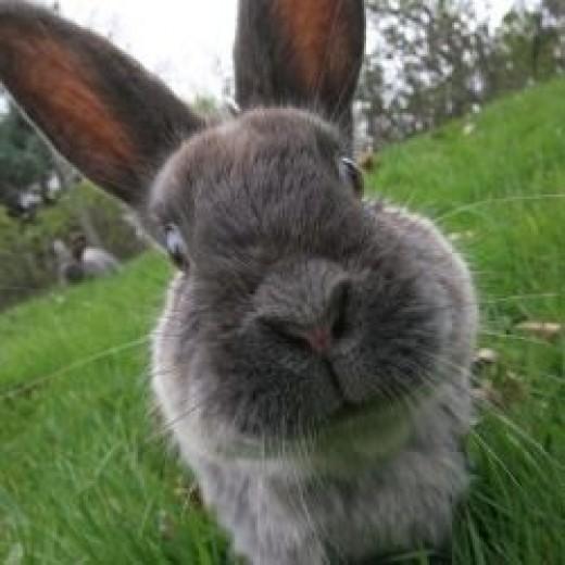 Google Images Bunny trails