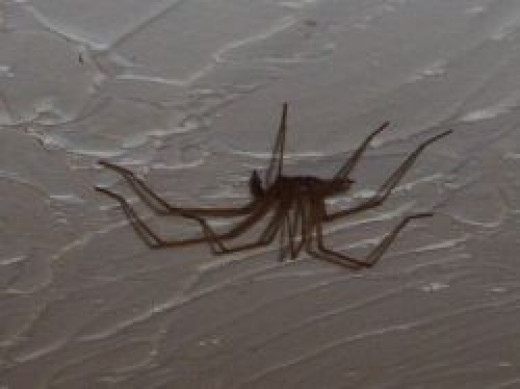 A spider on the ceiling