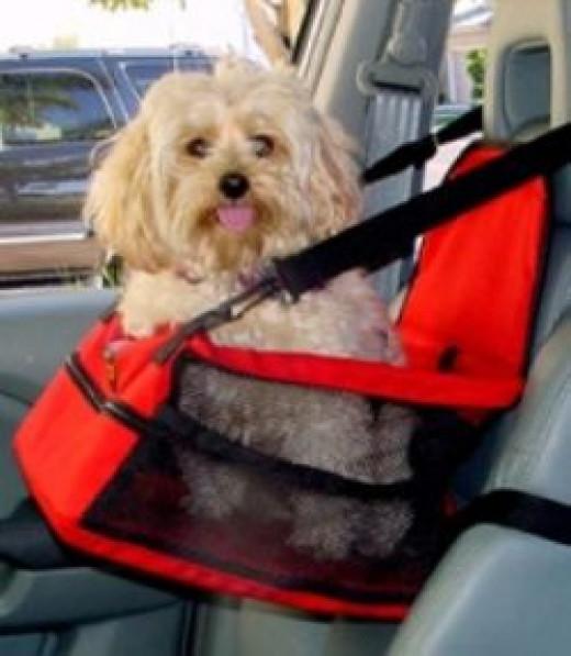 Buy pet car seat here.