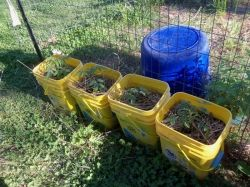 Recycled container planting by favored1