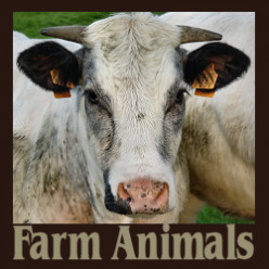 * Farm Animals: Real and Plush