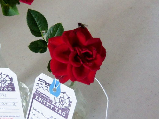 Miniature Red RoseComplete with country fly!