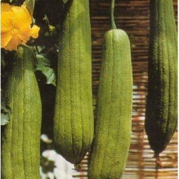 Buy loofah/luffa seeds from this site.
